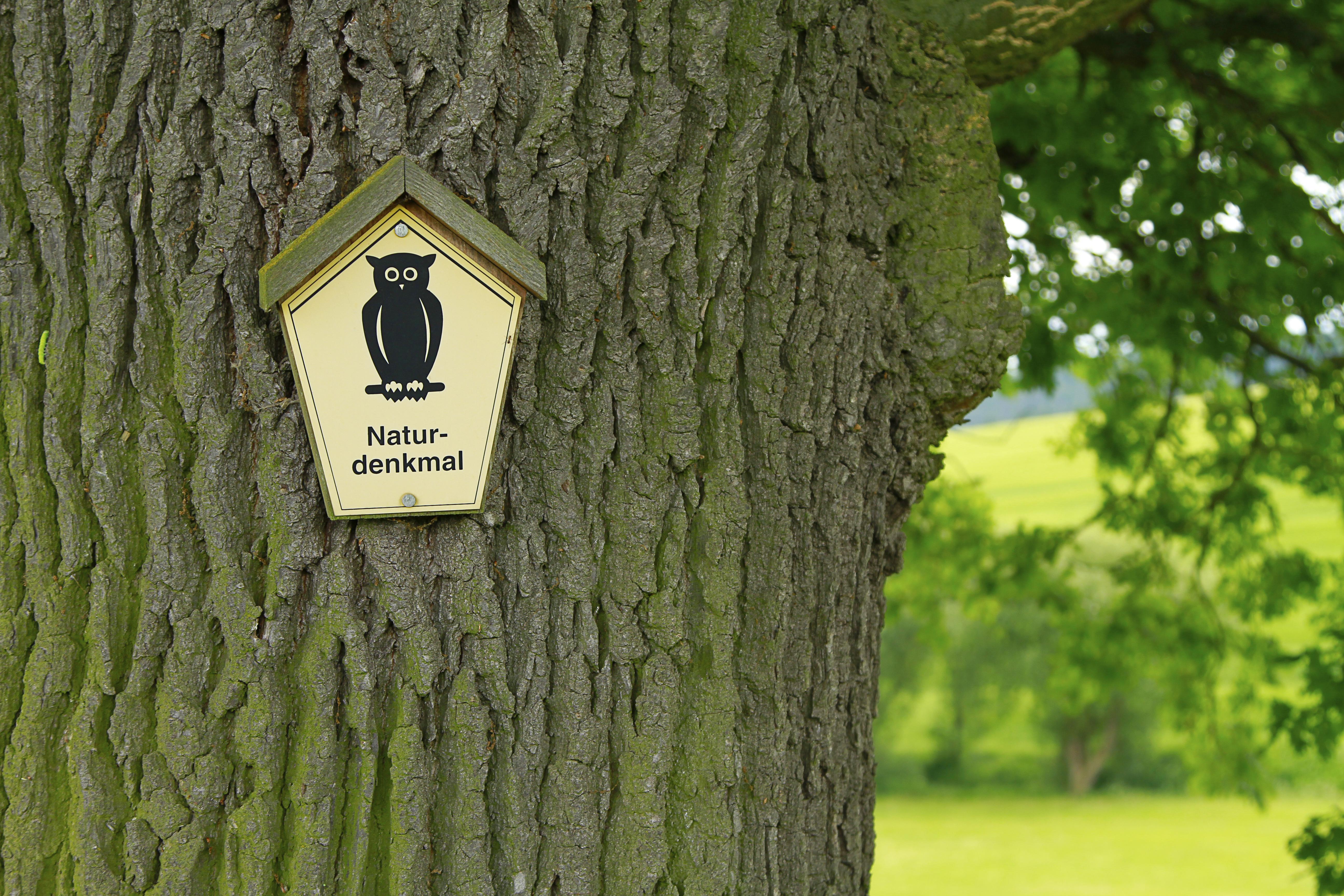 """Das Bild zeigt einen Ausschnitt des Stammes einer großen Eiche. Darauf ist ein fünfeckiges gelbes Schild mit einem schwarzen Uhu und dem Schriftzug """"Naturdenkmal"""" befestigt. Rechts im Hintergund sind grüne Wiesen und Sträucher zu sehen."""